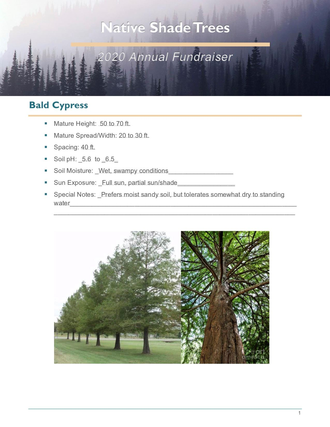 Brochure Template Draft_Native_Shade_Trees2.0(USE)