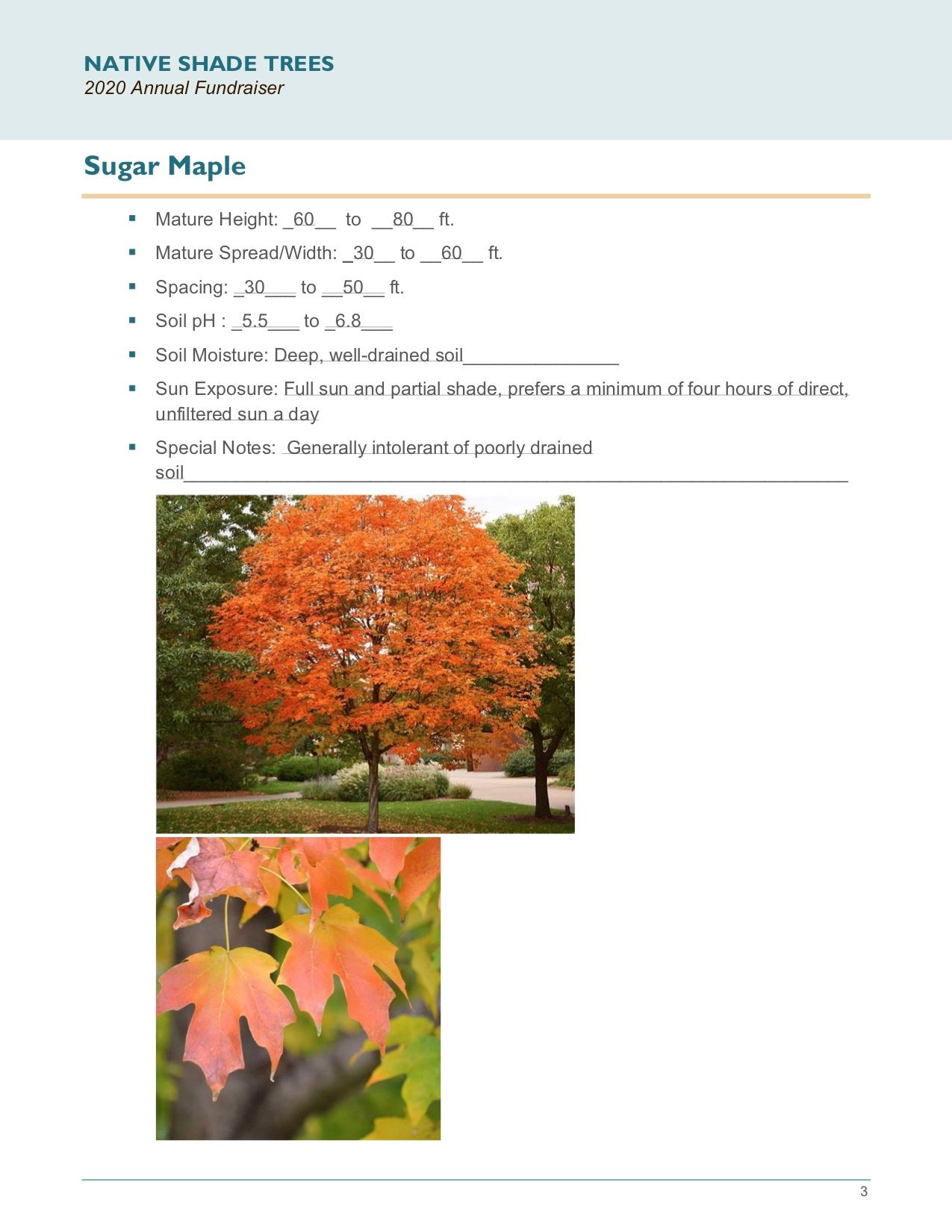 Brochure Template Draft_Native_Shade_Trees2.0(USE)pg3