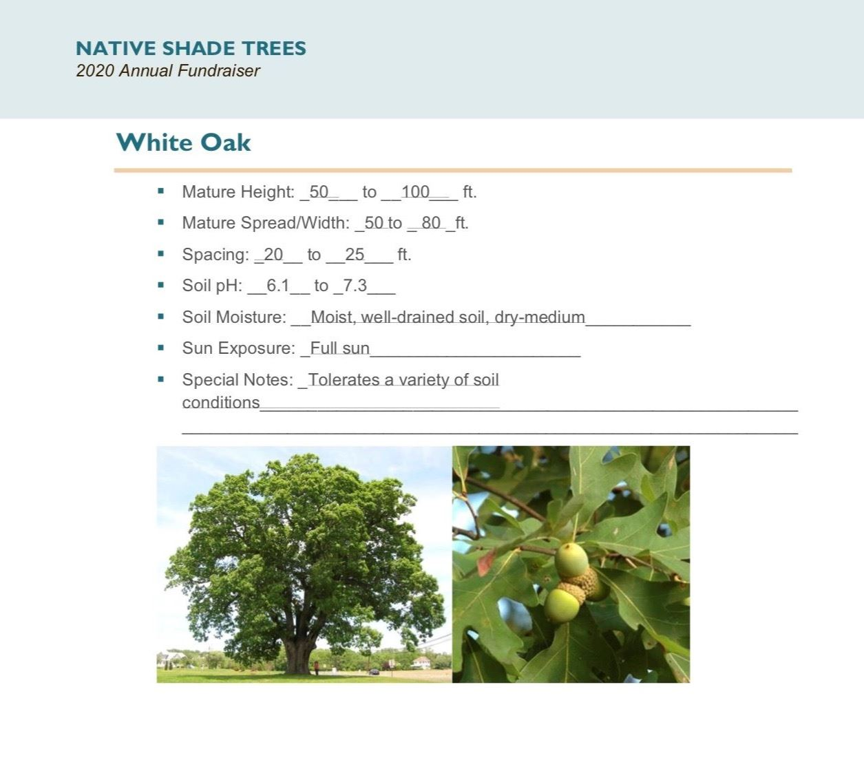Brochure Template Draft_Native_Shade_Trees2.0(USE)pg6