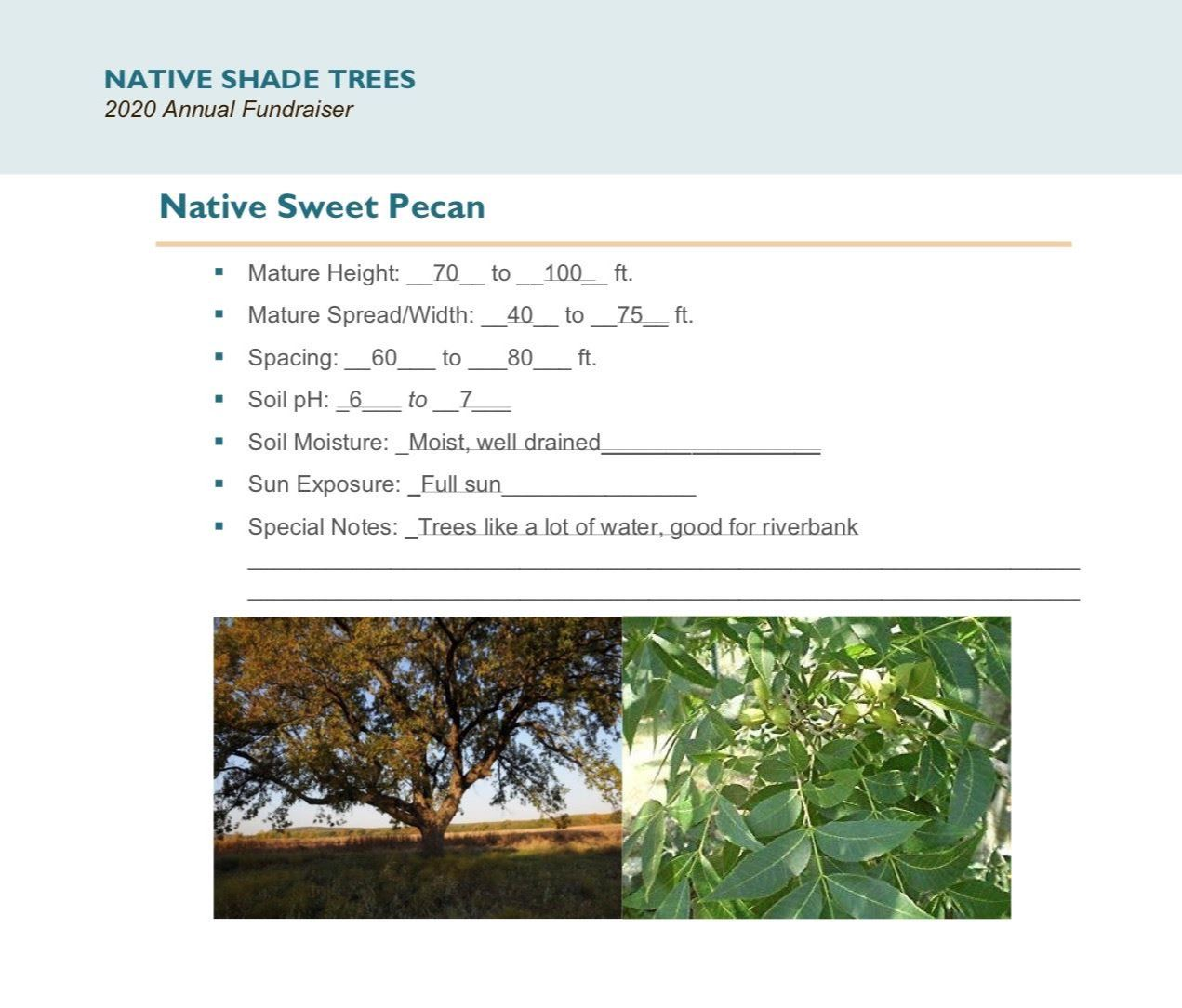 Brochure Template Draft_Native_Shade_Trees2.0(USE)pg7
