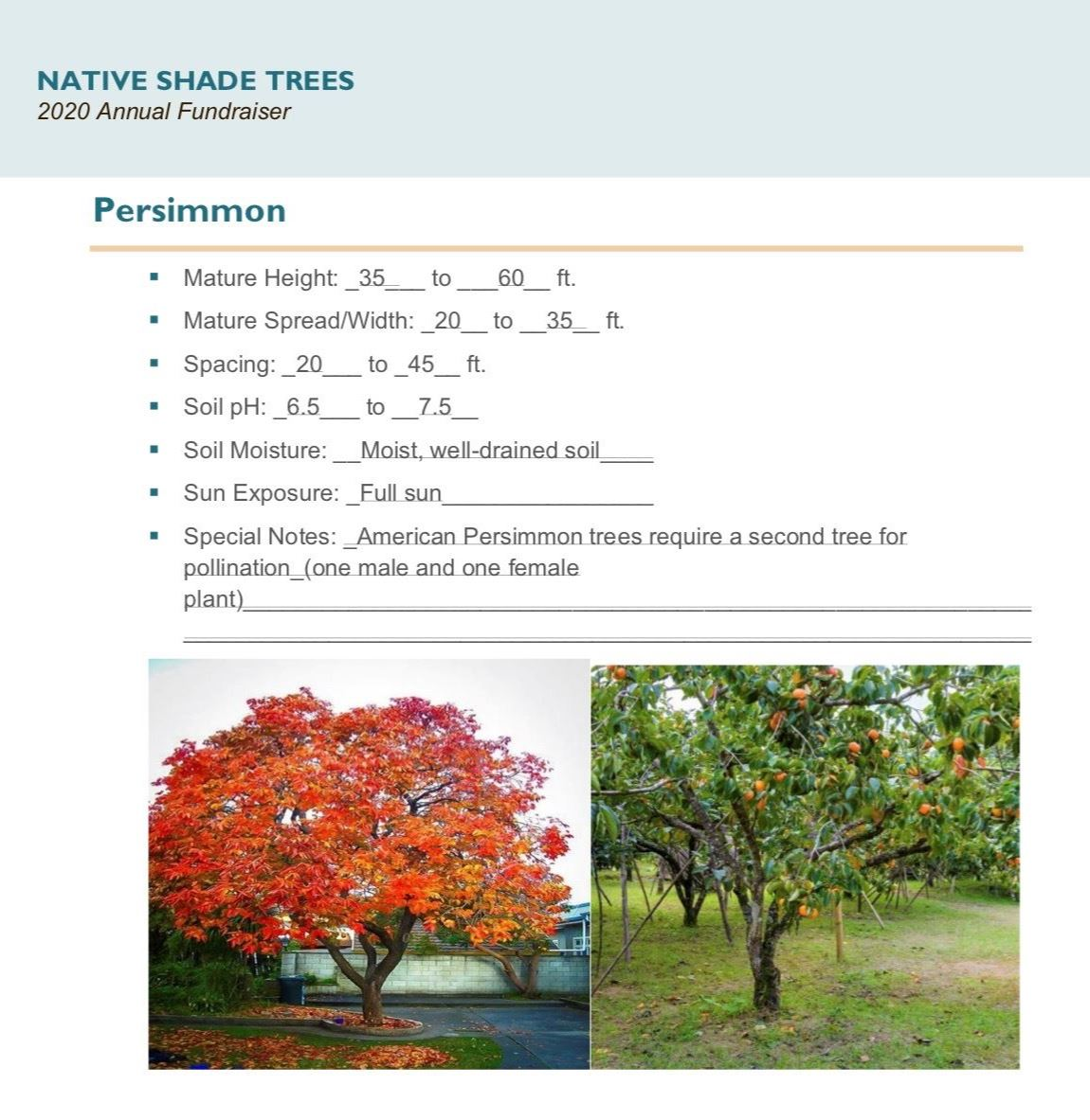 Brochure Template Draft_Native_Shade_Trees2.0(USE)pg8