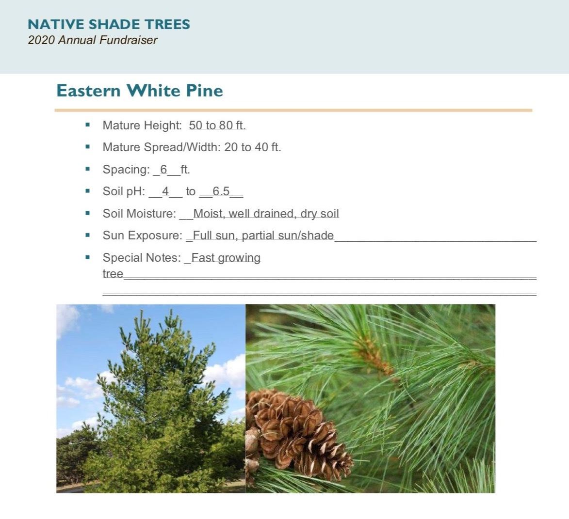 Brochure Template Draft_Native_Shade_Trees2.0(USE)pg9