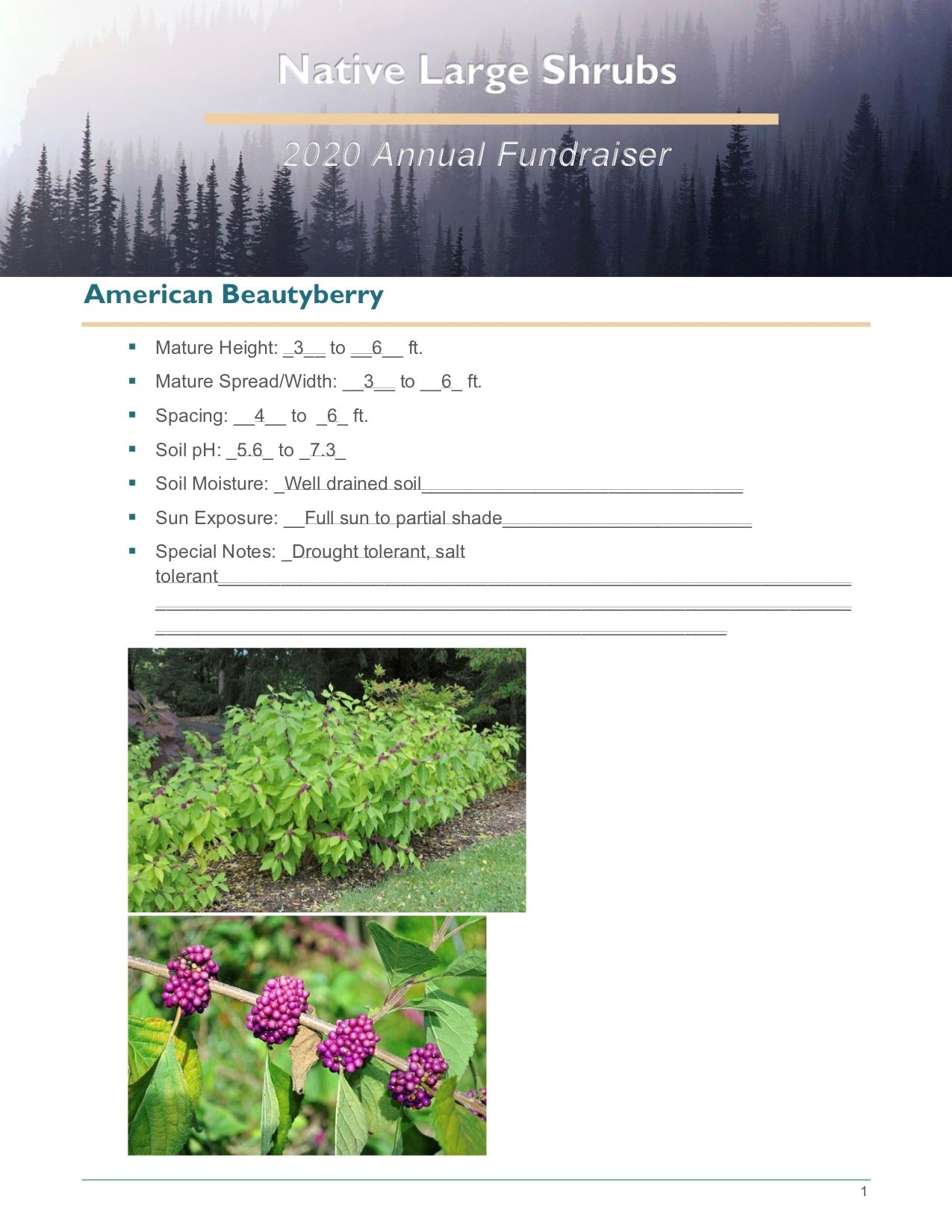 Brochure Template Draft_Native_Large_Shrubspg1