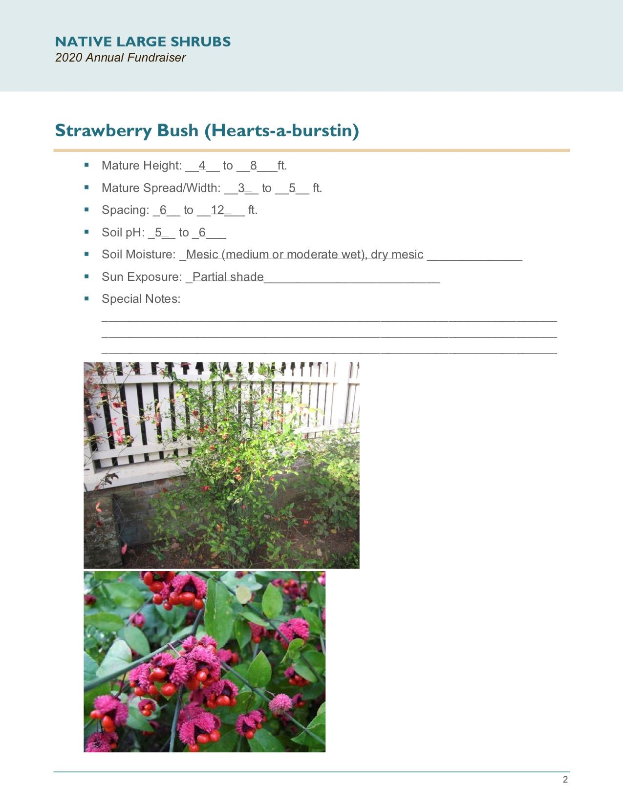 Brochure Template Draft_Native_Large_Shrubspg2