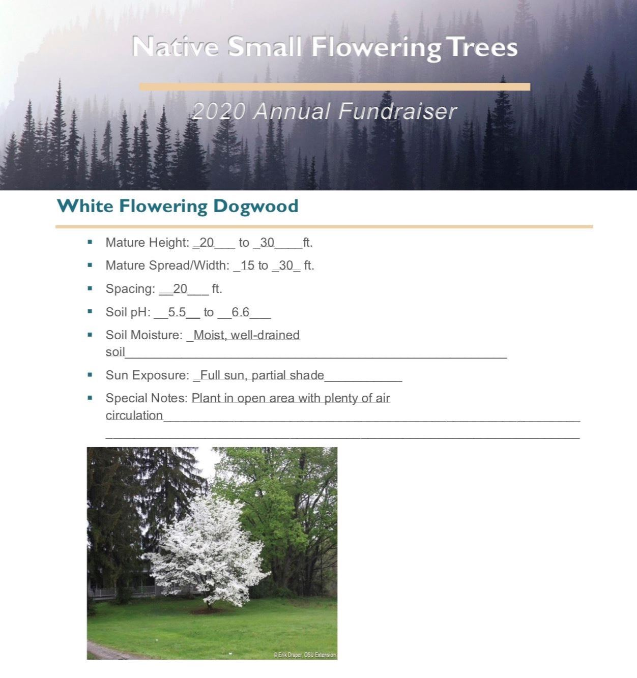 Brochure_Native_Small_Flowering_Treespg 1