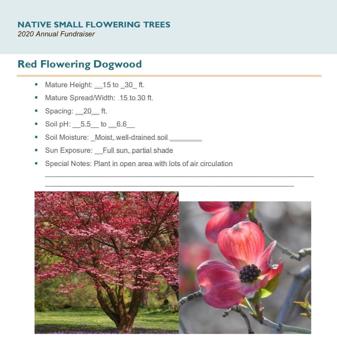 Brochure_Native_Small_Flowering_Treespg 2