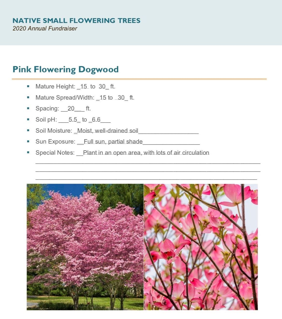 Brochure_Native_Small_Flowering_Treespg 3