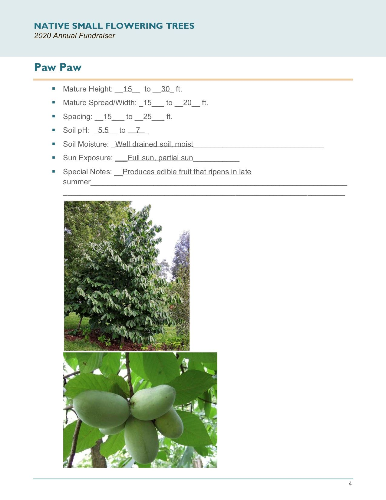 Brochure_Native_Small_Flowering_Treespg4