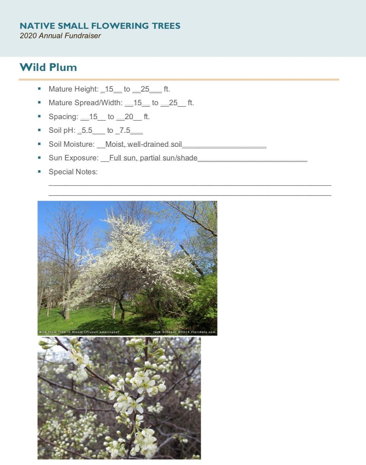 Brochure_Native_Small_Flowering_Treespg5