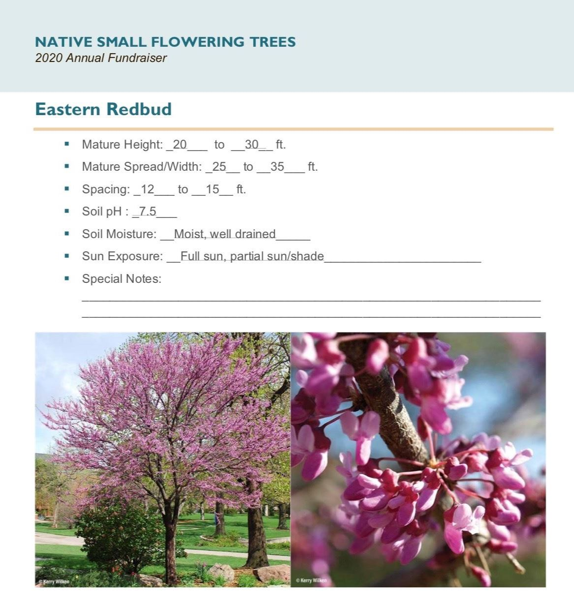 Brochure_Native_Small_Flowering_Treespg6