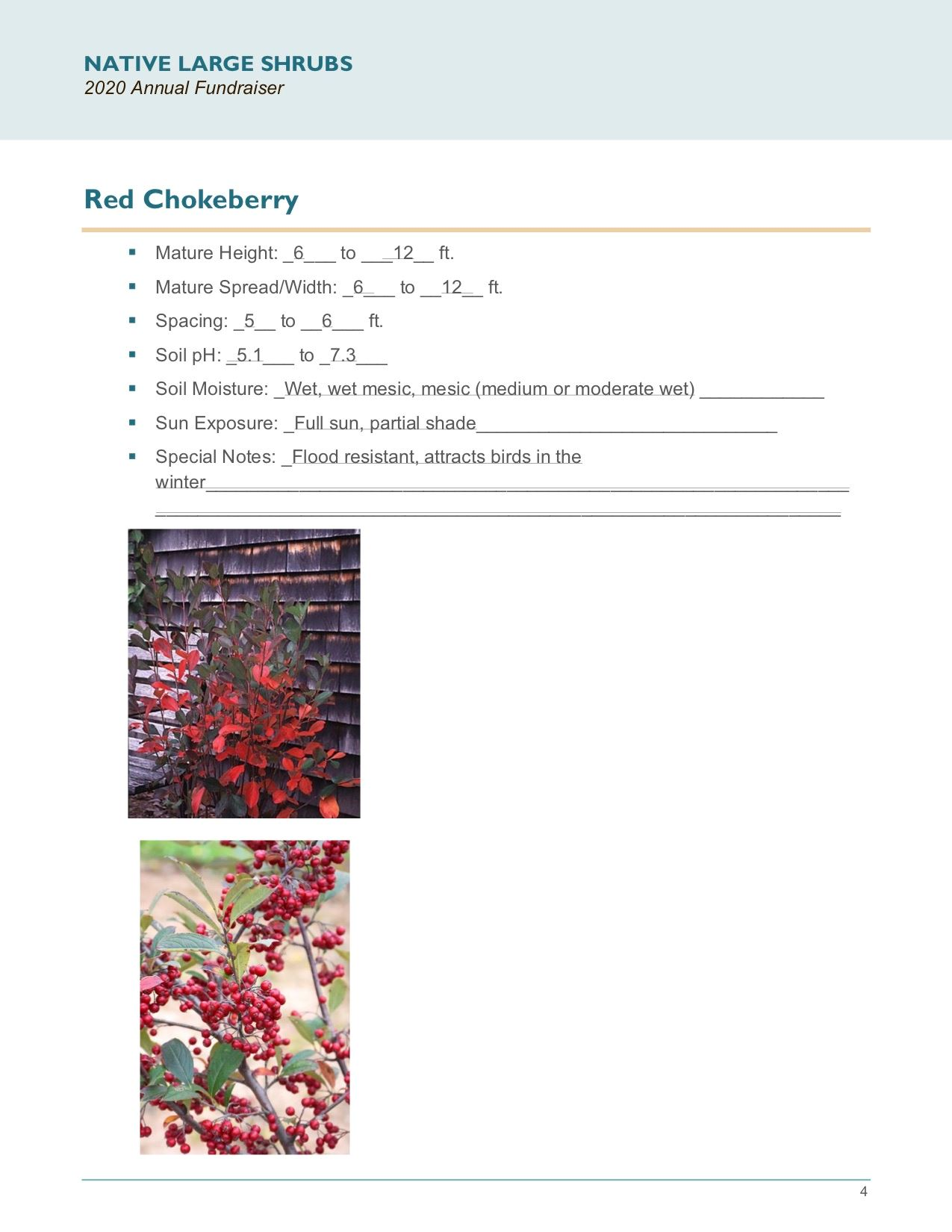 Brochure Template Draft_Native_Large_Shrubspg4