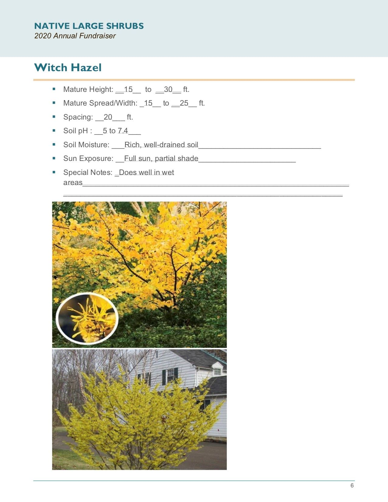 Brochure Template Draft_Native_Large_Shrubspg6