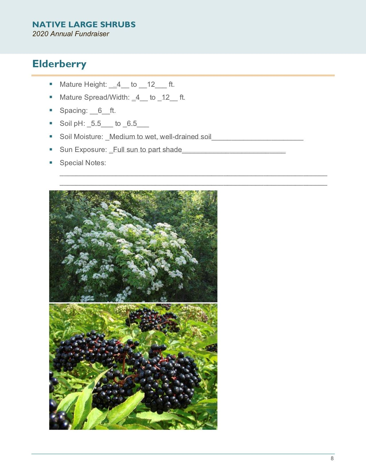 Brochure Template Draft_Native_Large_Shrubspg8