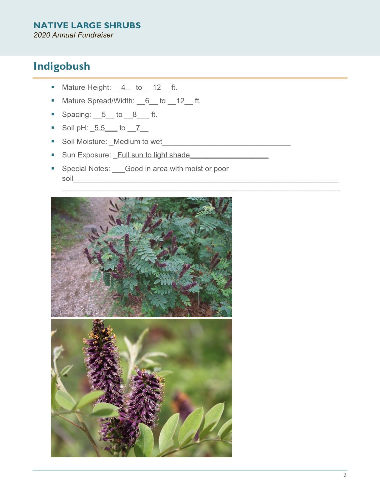 Brochure Template Draft_Native_Large_Shrubspg9