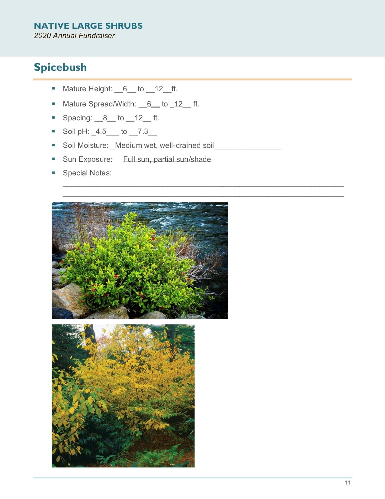 Brochure Template Draft_Native_Large_Shrubspg11